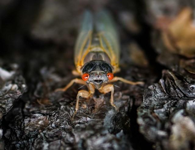 The cicadas are finally here!