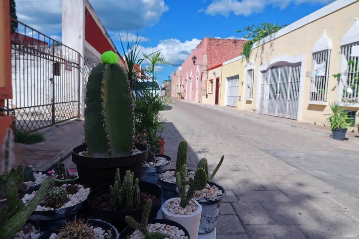 Street and some cacti in Valladolid, Mexico.