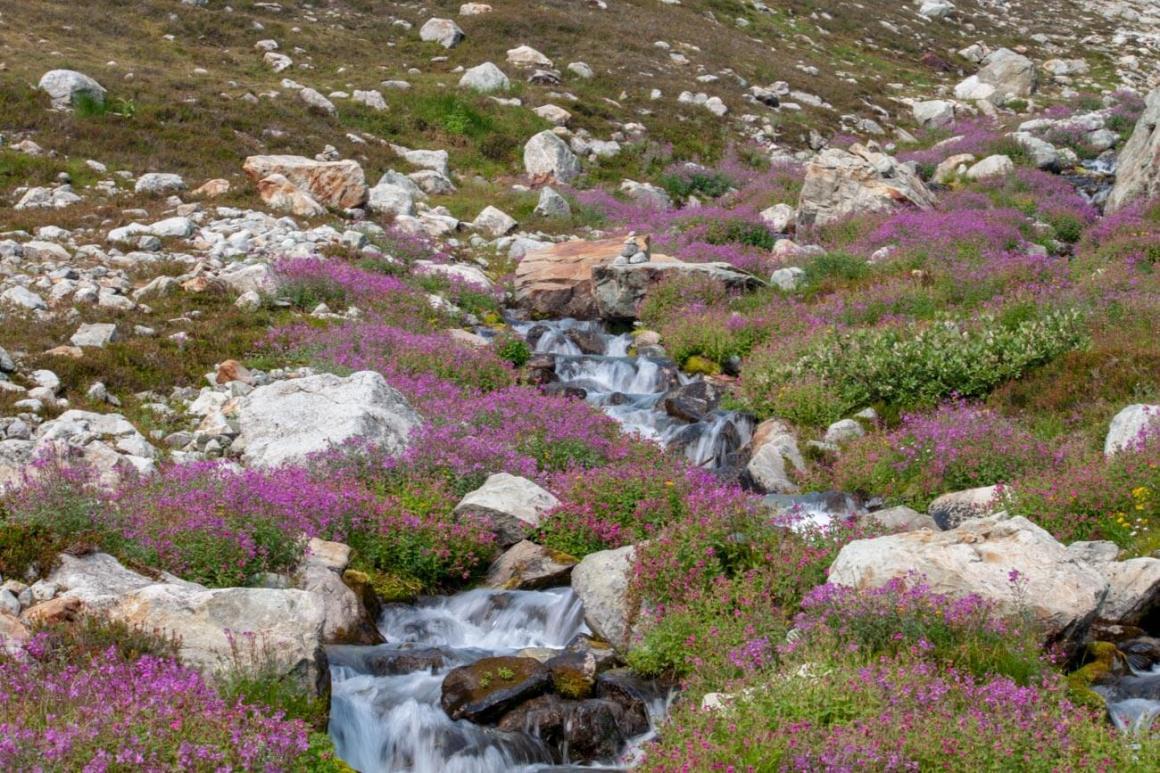Wildflowers and stream