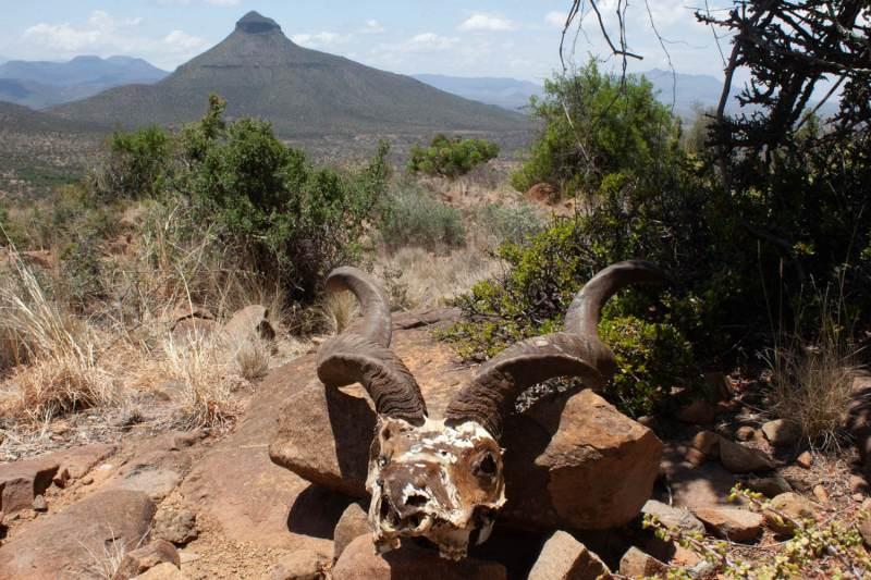 Skull, mountain, and desert in Camdeboo National Park