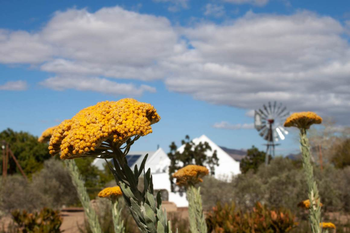 Flowers, sky, and windmill in Prince Albert