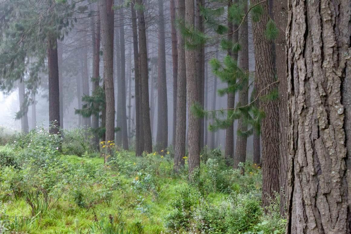 Misty forest of Hogsback