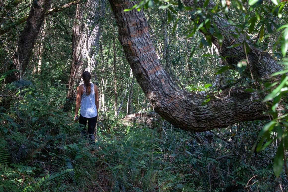 Kim in the Knysna forest.