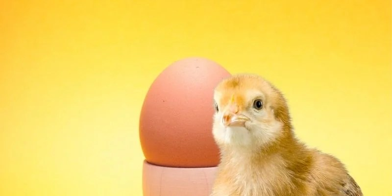 Sound Before Sight or The Chicken vs. The Egg Dilemma