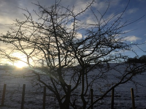 january blog post - 1 (2)