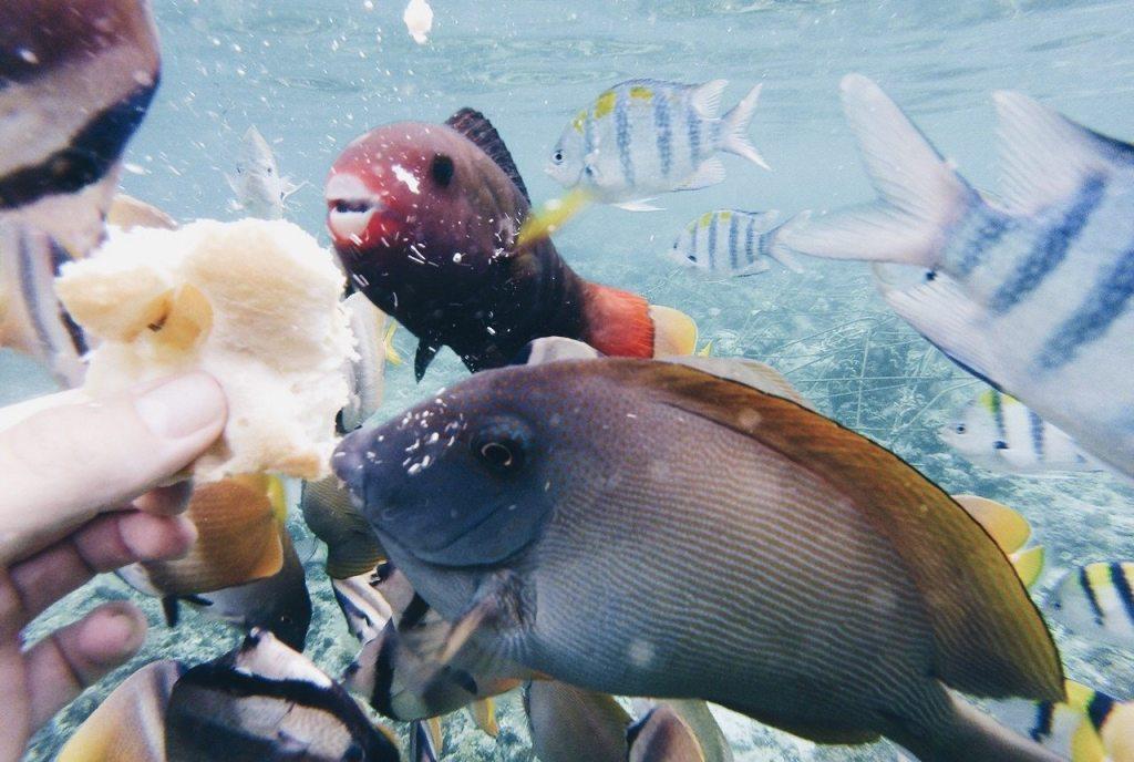Gili T Luxury Vila Ombak Bali Beach Accommodation Swimming Sea Turtles