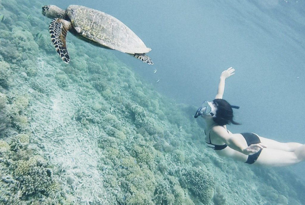 Gili T Luxury Vila Bali Beach Accommodation Swimming Sea Turtles