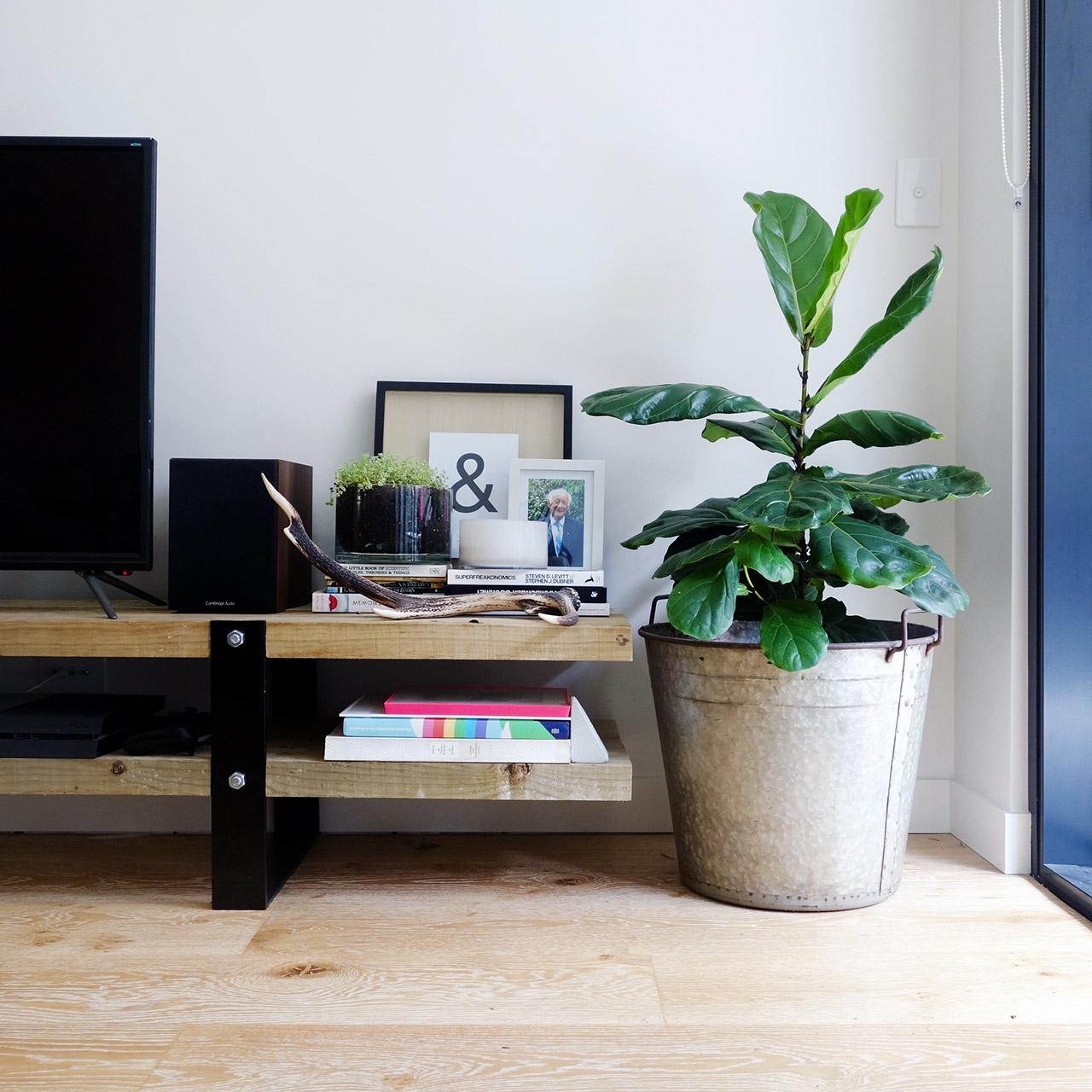 surry-hills-sydney-luxury-apartment-lounge-diy-steel-wood-tv-cabinet-fiddle-fig-leaf-tree-01