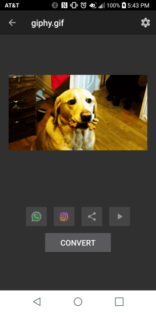 Dog Gif in Converting App