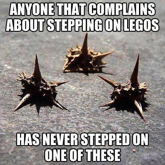 Anyone that complains about stepping on Legos, has never stepped on one of these (goat head stickers)!