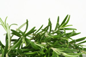 Rosemary fresh isolated