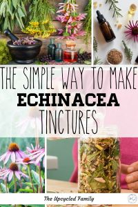 Echinacea tinctures are such an easy tincture to benefit from. How to make echinacea tincture right in your kitchen from those garden fresh flowers (or even dried herbs). An easy DIY Echinacea tincture recipe to boost your immune system. #echinaceatincture #recipe #howtomake #uses #benefits #DIY #immunesystem #naturalremedies #simple