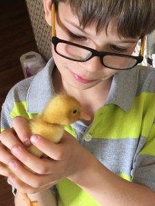 Duckling helper