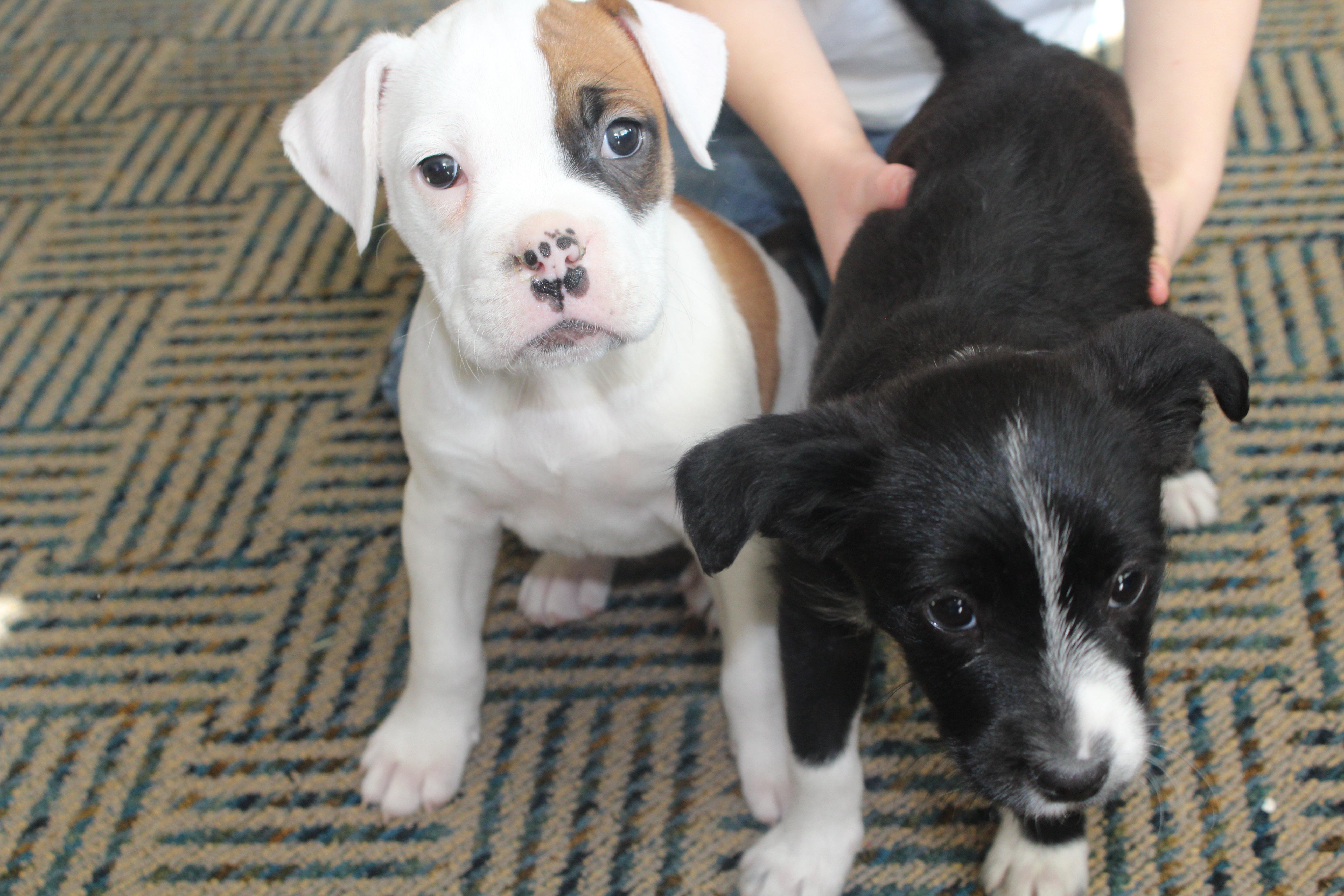 January pups