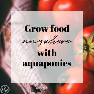 grow food anywhere with aquaponics