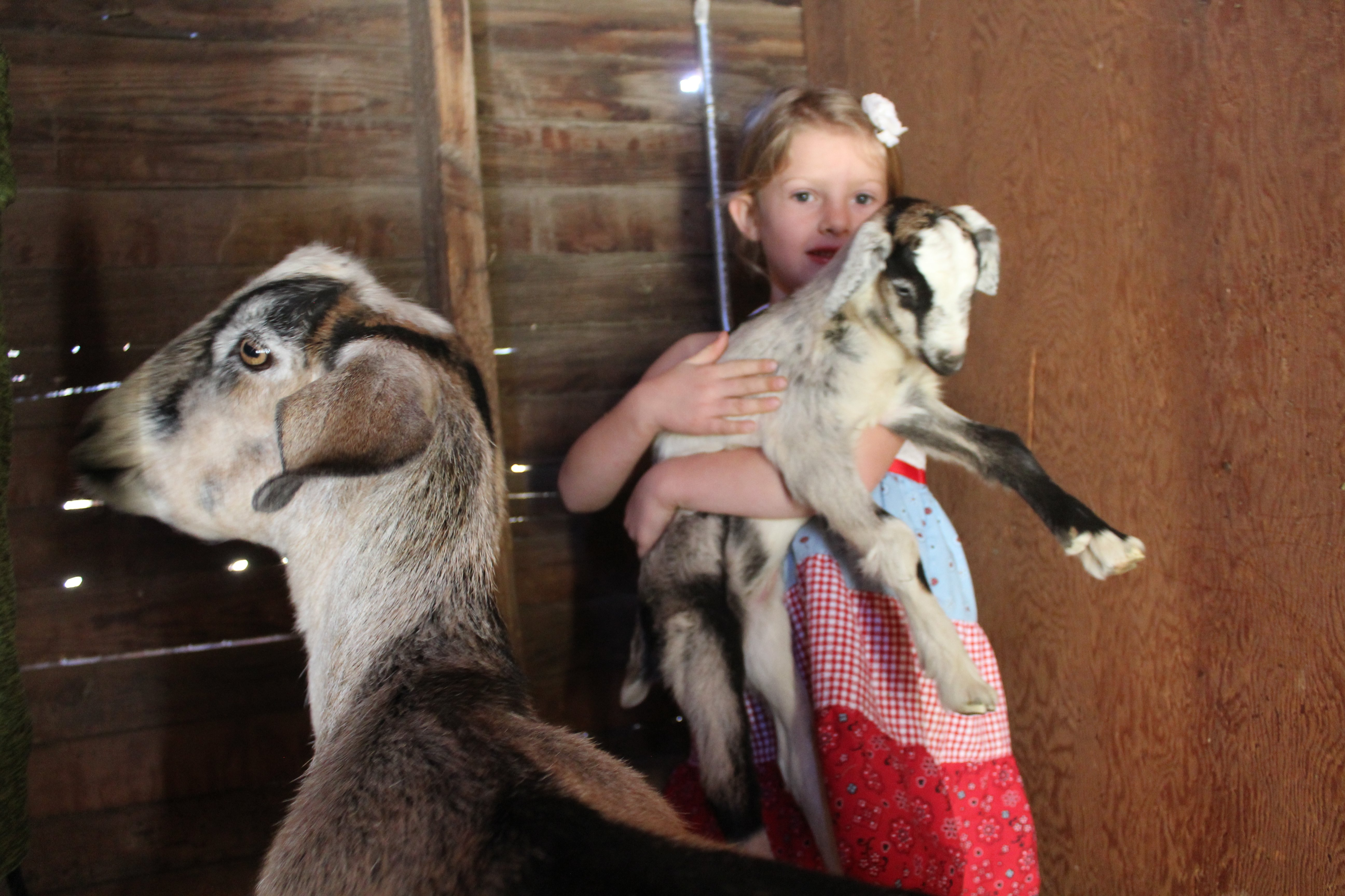 Goats on the homestead
