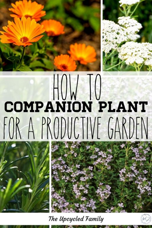 How to companion plant for a productive garden