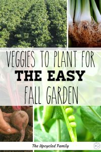 Fall garden ideas & Fall vegetable to plant. Don't let the garden goods stop with summer. 5 EASY Fall vegetable garden plants to start for that productive but easy garden. #fallvegetablegarden #plants #fallgardenideas #tips #vegetable #homesteading #unbanhomesteading #gardening #fallgardening