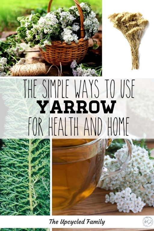 yarrow for health and home