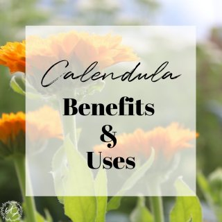 calendula benefits (1)