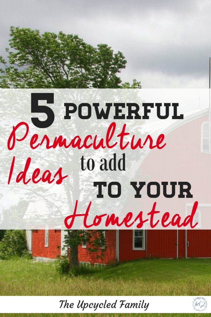 Homesteading and beyond! 5 powerful permaculture ideas to add to your homestead or farm. Regenerative & organic homebased agriculture ideas.