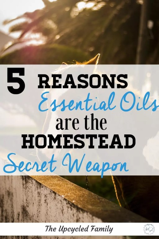 5 Reasons essential oils on the homestead are essential!