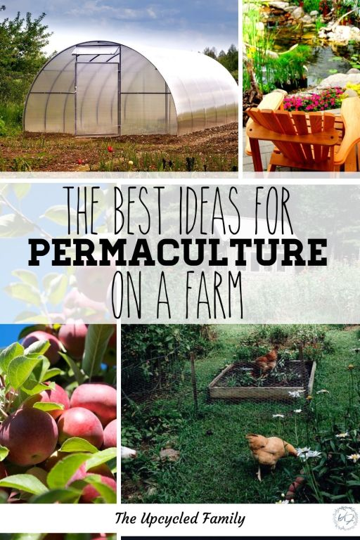 The best ideas for permaculture farms