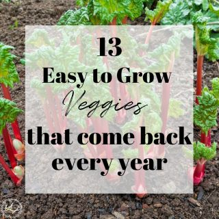 vegetables that come back every year