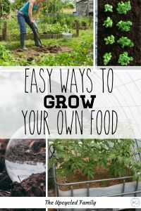 Easy ways to grow your own food