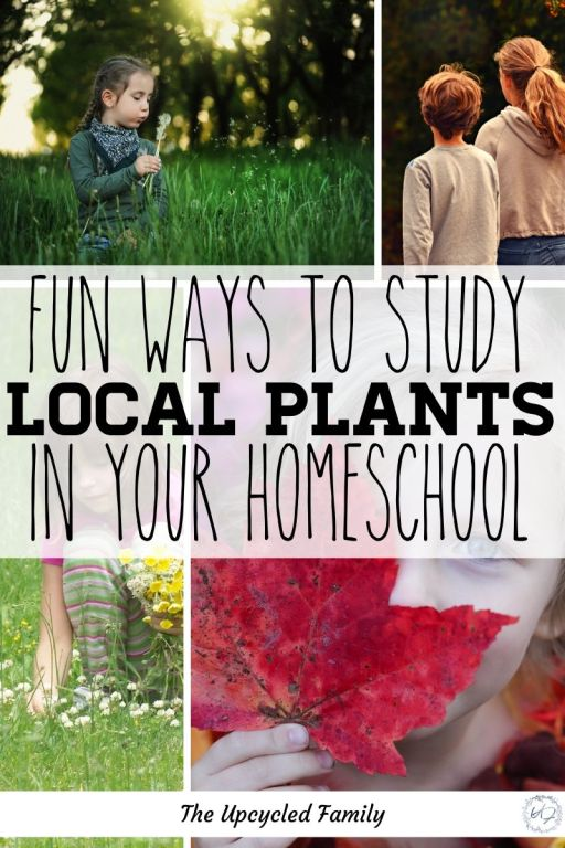 fun ways to study local plants in your homeschool