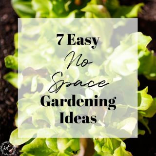 7 Easy no Space Gardening Ideas