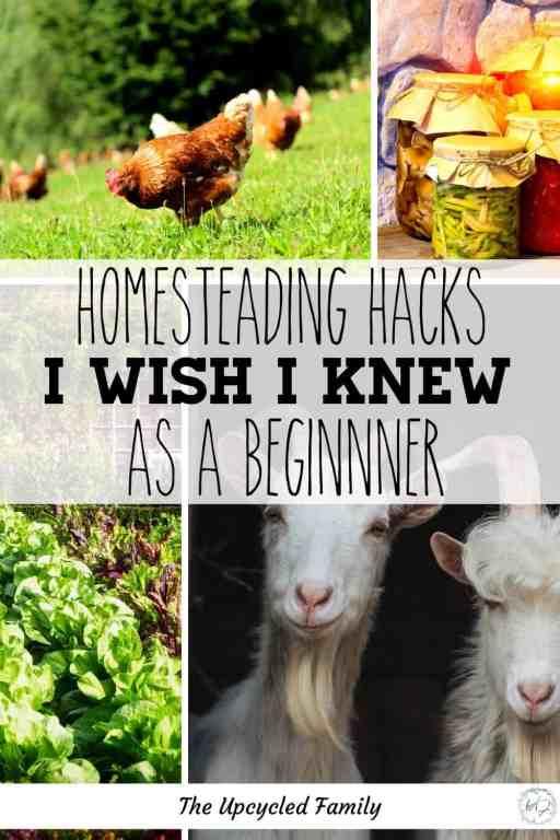 homesteading lifestyle