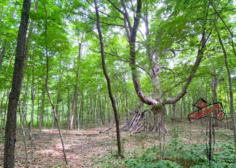 walk; hike; Petrifying Springs; Pets Park; trails