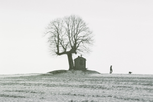 A lonely tree in a lonely sad sack of a field