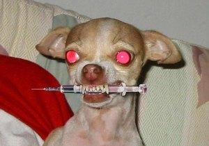 prozac-dog