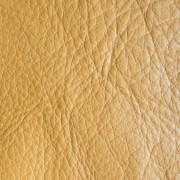 mustar-1024x768