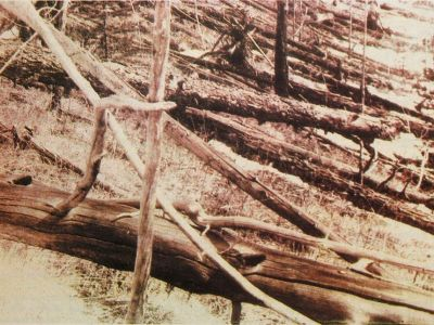 Kuliks 1929 expedition Tunguska_event_fallen_trees near Hushmo river credit wikimedia commons