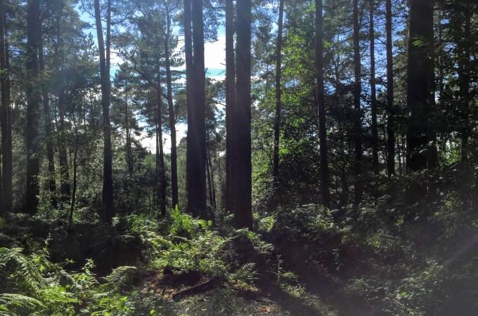 Delamere Forest – Mud and Sunshine