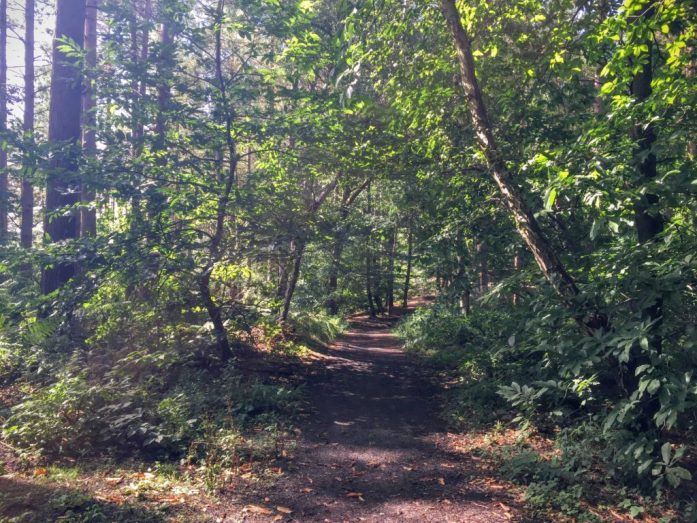 Delamere Forest, Cheshire | The Urban Wanderer