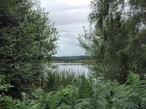 Delamere Forst, Cheshire | The Urban Wanderer | Sarah Irving
