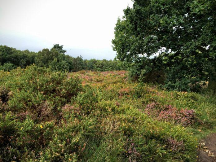 Thor's Rock | Thurstaston Common, Wirral | The Urban Wanderer | Sarah Irving