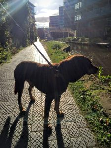 Borrow my Doggy, Whitworth Park, Bridgewater Canal and Ball Throwing   The Urban Wanderer   Sarah Irving   Manchester