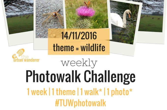 The Urban Wanderer Weekly Photowalk Challenge | #3 Wildlife