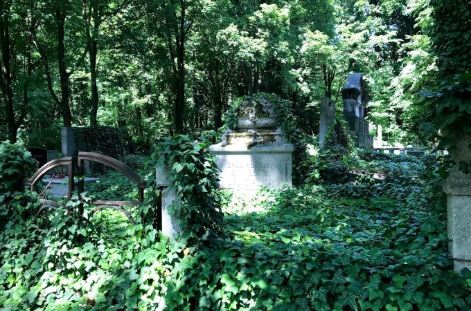 Łódź Jewish Cemetery – Reclaimed by Nature