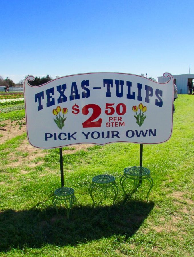 Must-Visit North Dallas: Texas Tulips