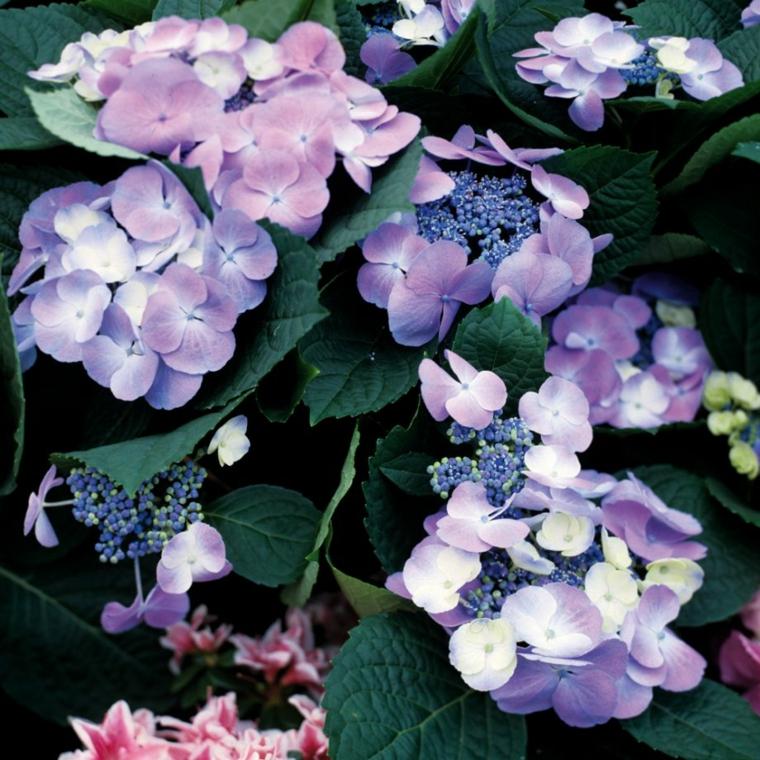 design-garden colorful flowers