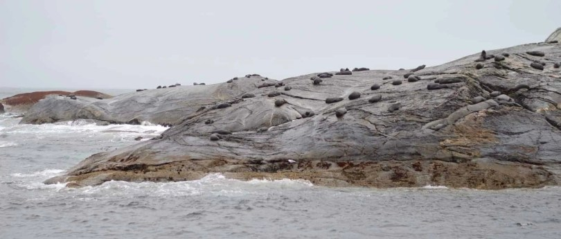 NZ Fur Seals, Doubtful Sound