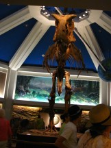"""""""Dinosaur Ride at Dinoland USA"""" by Castles, Capes & Clones is licensed under CC BY-ND"""