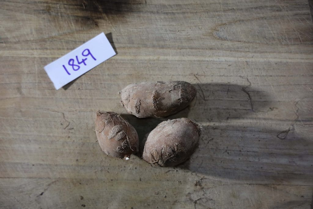 Groundnut-Trial-1849