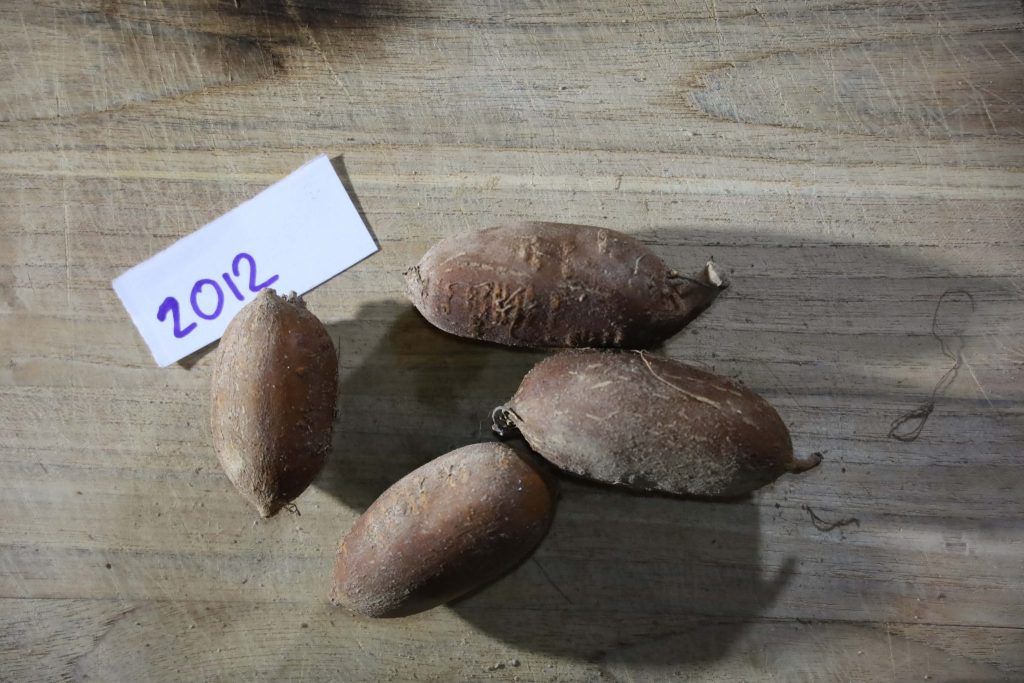 Groundnut-Trial-2012